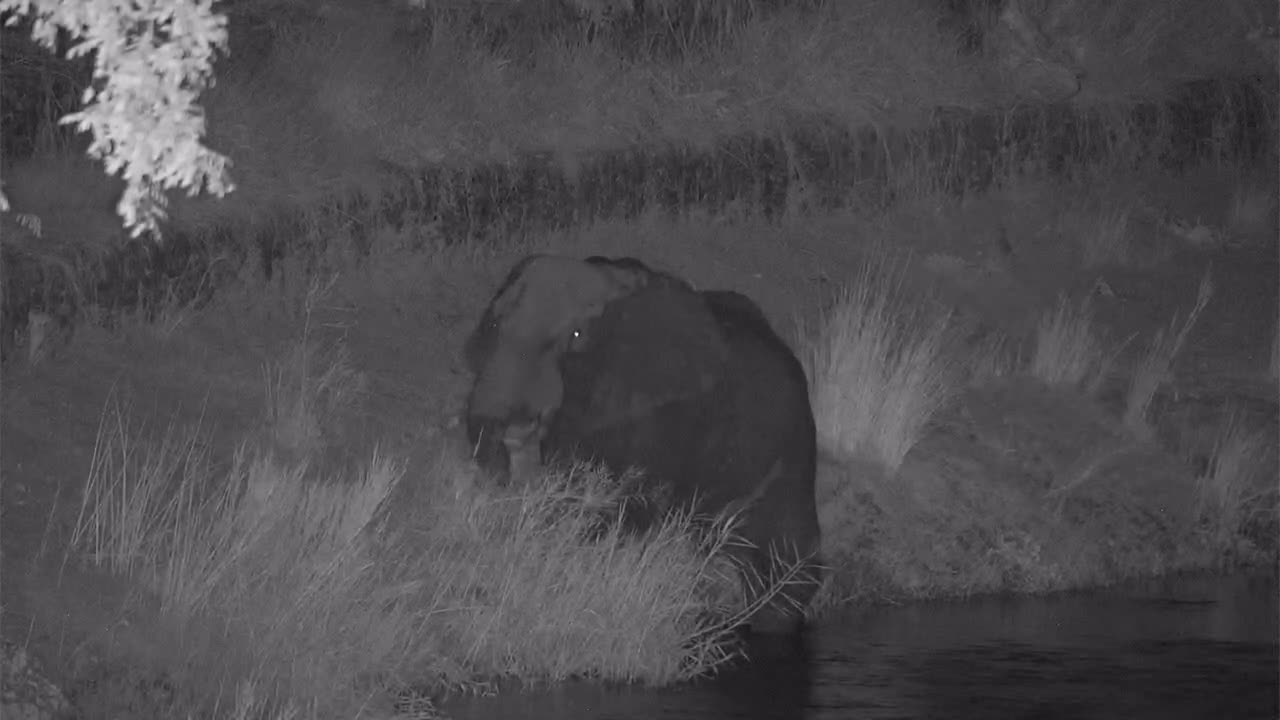 VIDEO: Elephant feeding on the riverbank