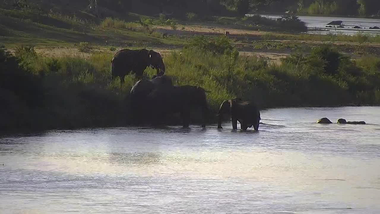 VIDEO:  Elephants, Impala and Kudu enjoying the afternoon