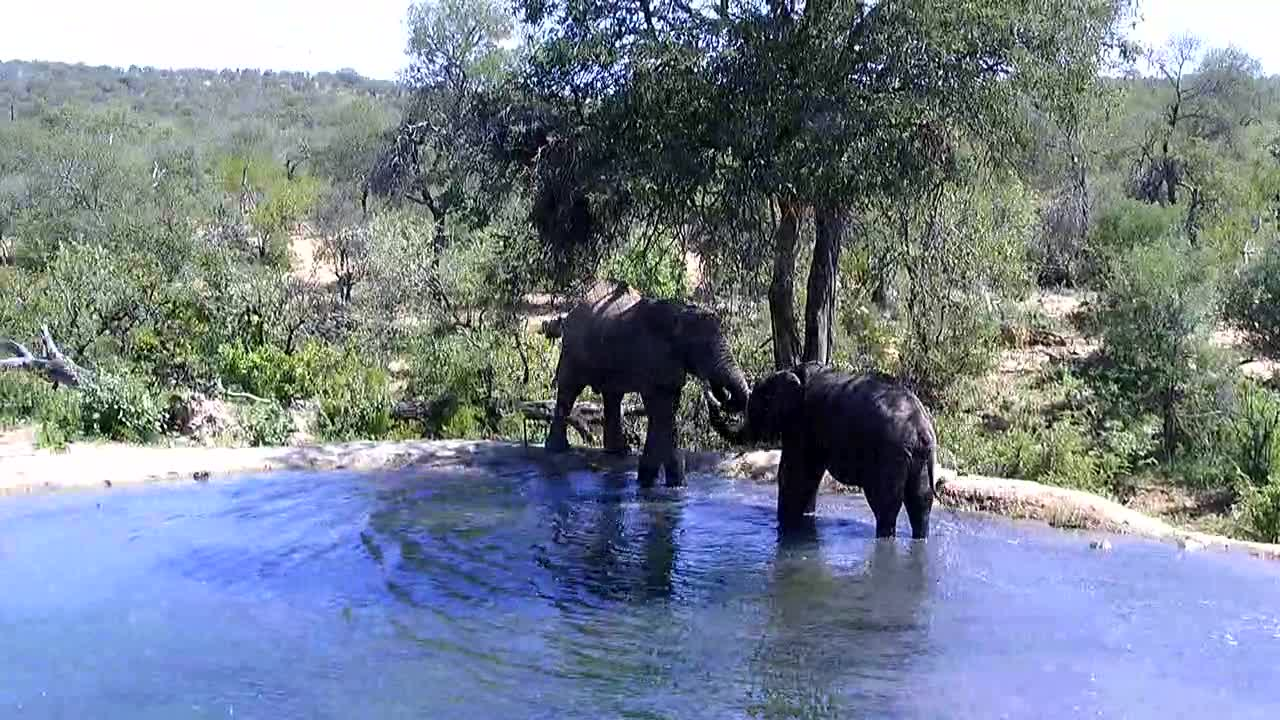 VIDEO: Elephants at  the  waterhole and leaving.