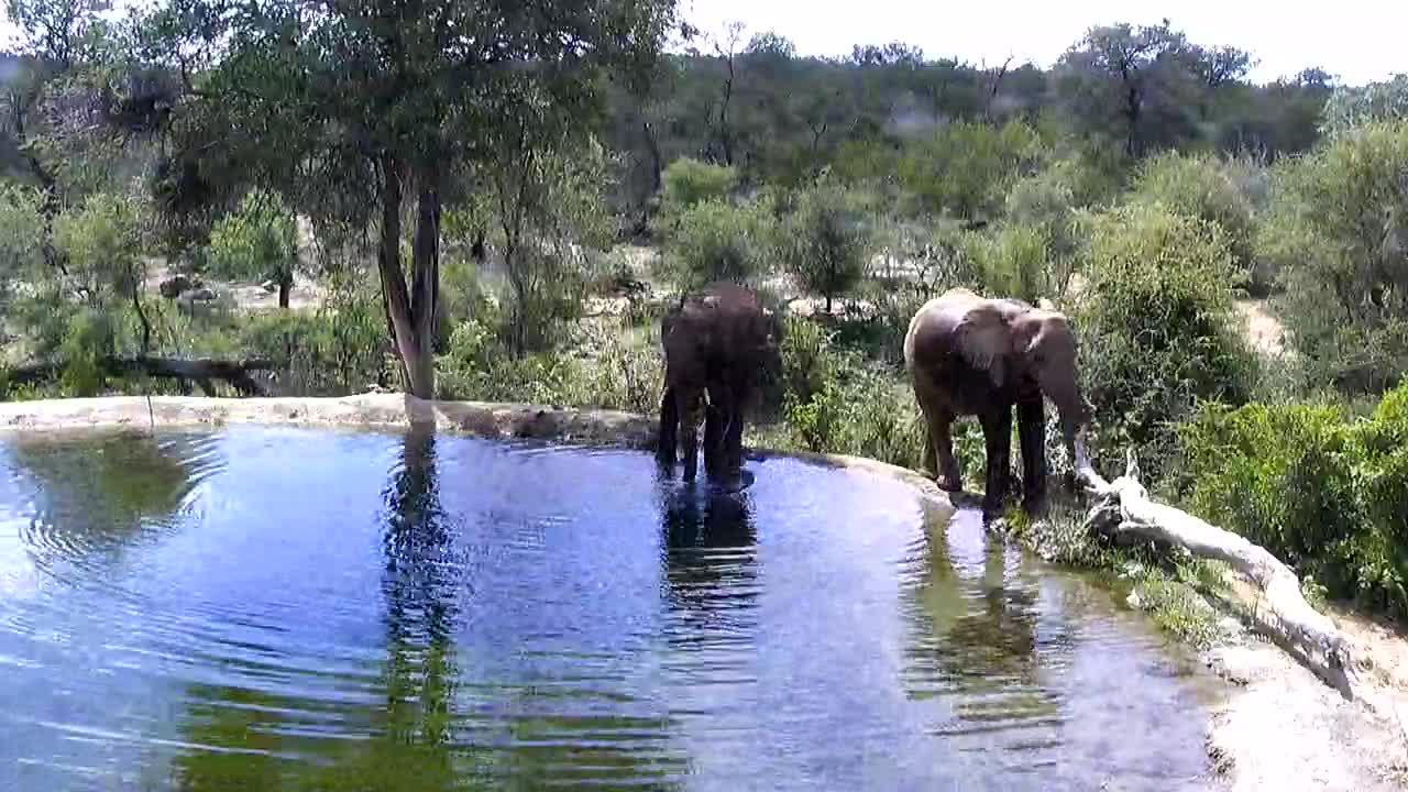 VIDEO:  Elephants enjoying a drink of water