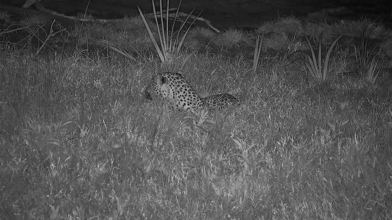 VIDEO: Leopard relaxing near the waterhole