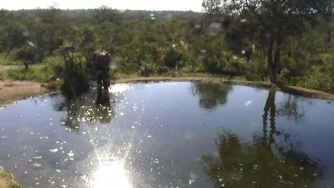 VIDEO: Elephants drinking at waterhole